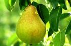 Что общего между фруктами и Ким Кардашьян
