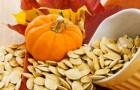 Чудесные свойства тыквенных семян