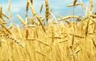 Как история поможет нам с зерновыми