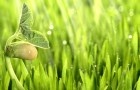 Как лекарства влияют на рост растений