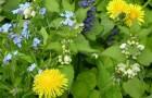 Плохие новости для садоводов: сорняки непобедимы!