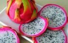 Драконий фрукт для здоровья сердца и от диабета