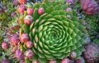 Как растения приспосабливаются к необычным условиям