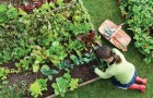 Органическое садоводство способно накормить весь мир