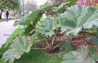 От чего зависит высота растений
