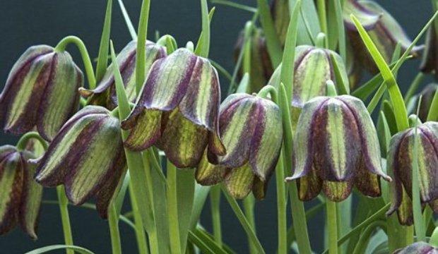Запрет на использование исчезающих растений