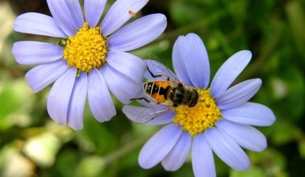 Растения дадут фору животным при массовом вымирании