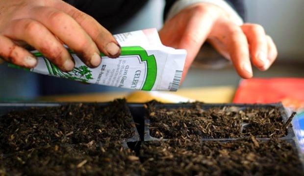 29 мая 2015 года: пример посева смеси семян