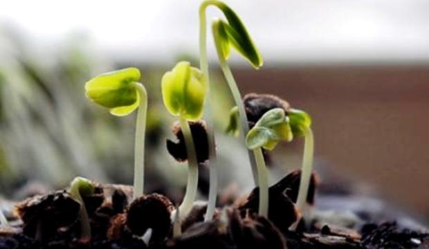 3 мая 2015 года: продолжаем сеять овощные культуры