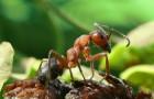 Как бороться с вредителями растений – тля, гусеницы, блошки