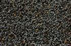 Посев очень мелких семян