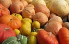 Можно ли выращивать тыквенные культуры рассадой