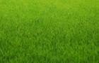 Зачем нужно удобрять газон