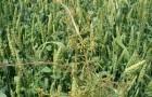 Что такое «тургор растения»?