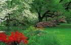 Как обрабатывают растения в саду?
