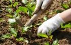 Как правильно рыхлить почву?