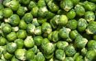 Когда нужно сеять семена брюссельской капусты?