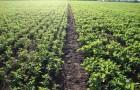 Обработка семян биопрепаратами