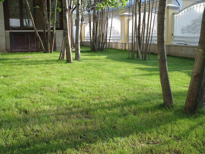 Скошенный газон