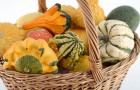 Сушка и хранение тыквы и кабачков
