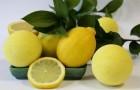 Ванна с лимонной цедрой