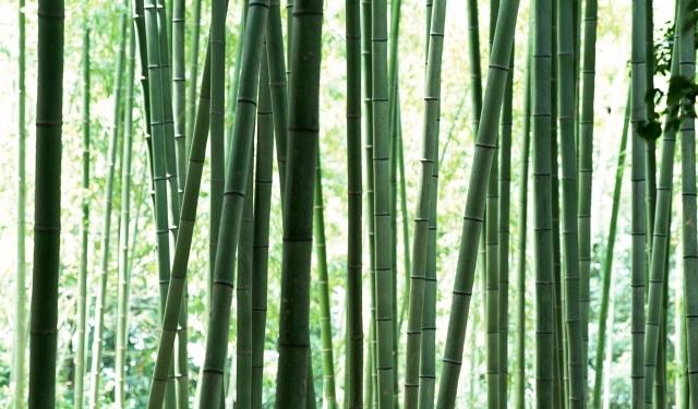 Заломы в основании стебля