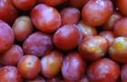 Сорт сливы домашней: Россошанская крупноплодная