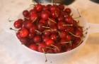 Сорт вишни обыкновенной: Аннушка