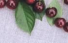 Сорт вишни обыкновенной: Десертная Тихоновой