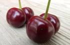 Сорт вишни обыкновенной: Лада