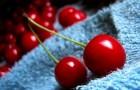 Сорт вишни обыкновенной: Виктория