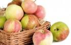 Сорт яблони: Алёнушкино