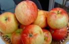 Сорт яблони: Дагомысское