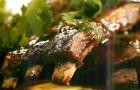 Ребра ягненка с печеными баклажанами