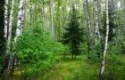 Смешанные леса не оставляют монокультурным шанса!
