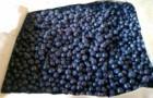 Сорт смородины черной: Бирюлёвская