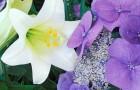 Белый и фиолетовый
