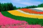 Фермеры цветоводы борются с корпорациями