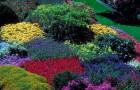 Горячие цветники