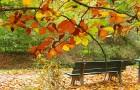 Какие работы в плодовом саду необходимо проводить осенью?