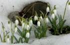 Какой будет весна?