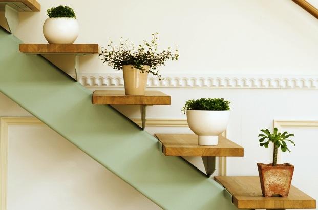 Комнатные растения и их место в квартире