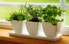 Комнатными растениями не комфортно зимовать на подоконнике