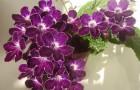 Маджента и темно-пурпурный