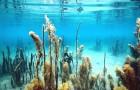 Мелкие обитатели водоема