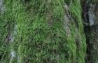 Мешает ли мох растениям?