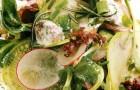 Микс-салат с редисом и куриными потрохами в сливочном соусе с хреном