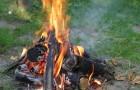 Нужно ли сжигать древесные остатки?