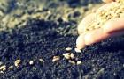 Посев семян на альпийской горке