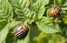 Способ борьбы с жуками